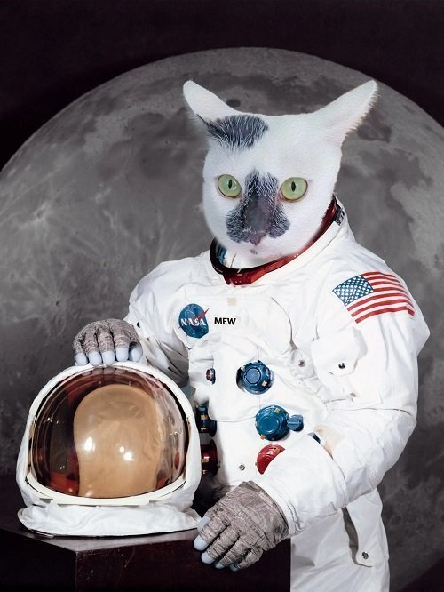 Cute Pet Portrait - The Astronaut - Custom Cat Portrait