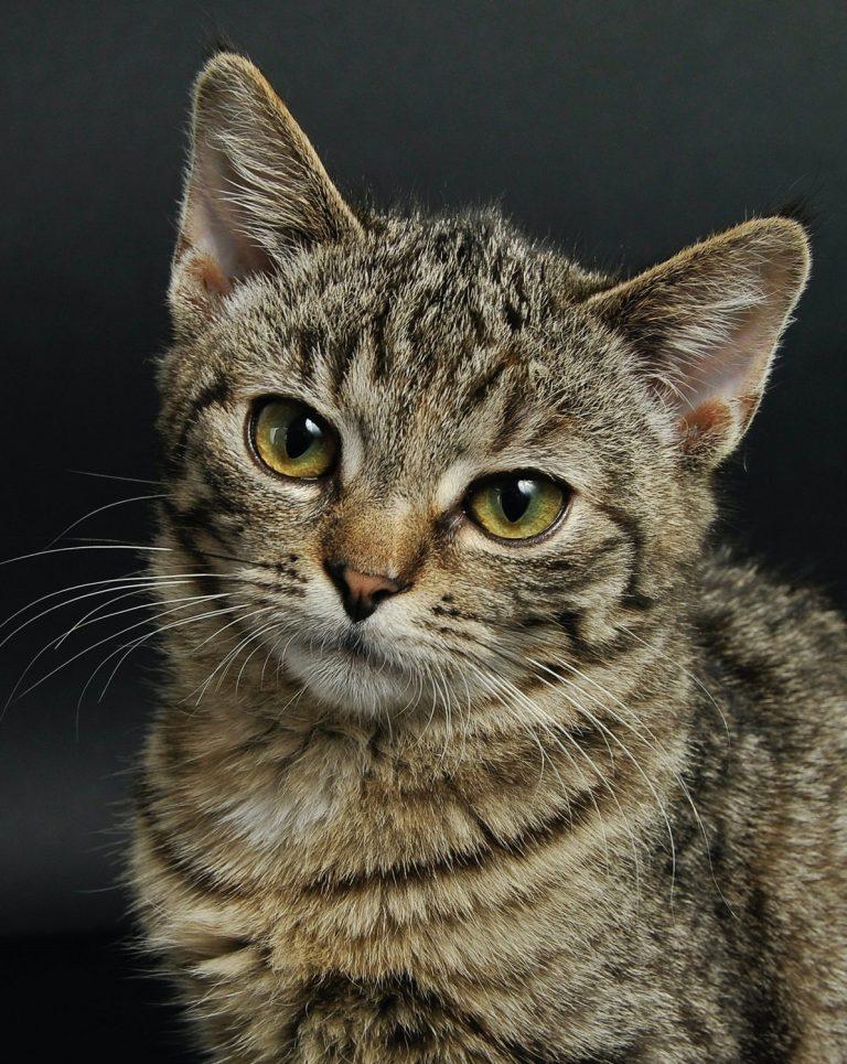 Cat Sample Photo - 2 - Resized
