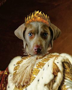 The Emperor - Dog - Cute Pet Portrait